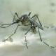 Come far sparire le zanzare? Con il caffè. Vi spieghiamo come fare